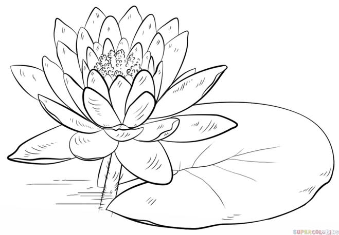 Готовый рисунок кувшинки (водной лилии, лотуса)