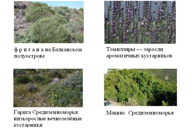 Жестколиственная растительность Средиземноморья