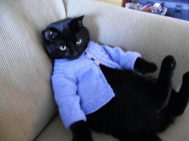 Одежда для котёнка своими руками связать
