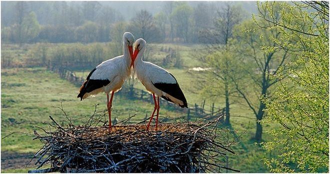 Какая птица считалась птицей Геры?