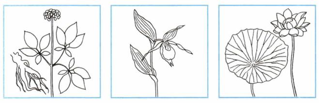 Красная книга раскраска растения