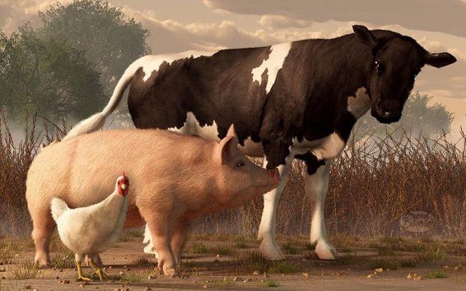 Что такое животноводство  Понятное дело что животноводство подразумевает как разведение различных видов животных так и выведение новых пород путём скрещивания