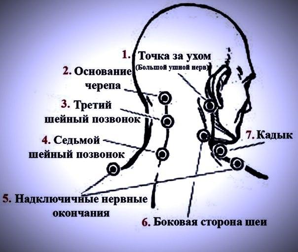 7 шейный позвонок
