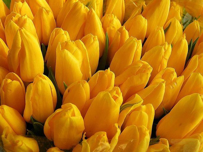 Приметы желтые цветы
