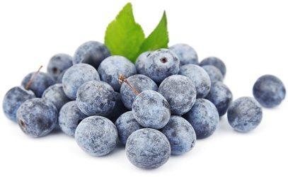 плоды тёрна польза и вред
