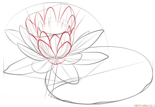 как нарисовать водную лилию 6