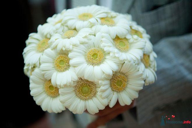 Декоративный цветок 7 букв