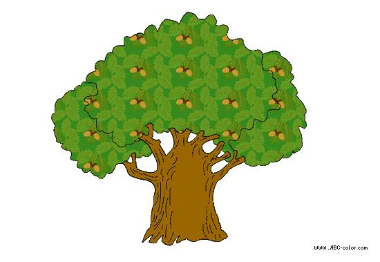 Посадка ясеня размножение и уход фото дерева листьев и