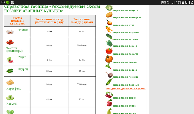 На каком расстоянии сажать помидоры в теплице 78