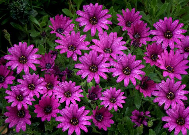 О красоте растений в стихах 78
