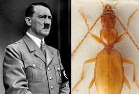 Anophthalmus hitleri цена жука
