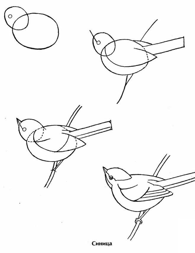 Как рисовать птичку детям поэтапно