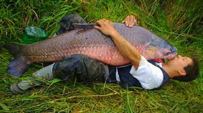 Рыба съела рыбака