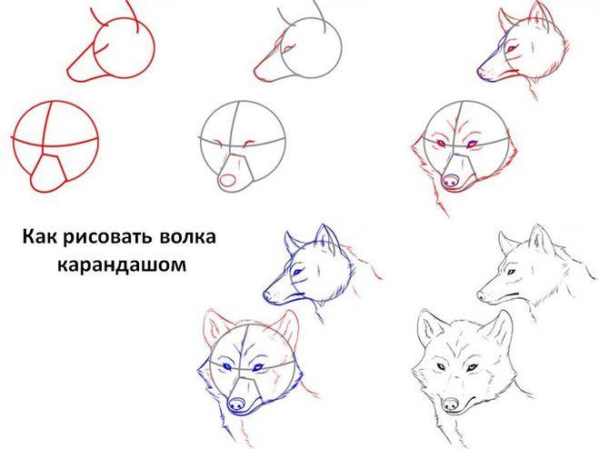 Туловище волка можно так же
