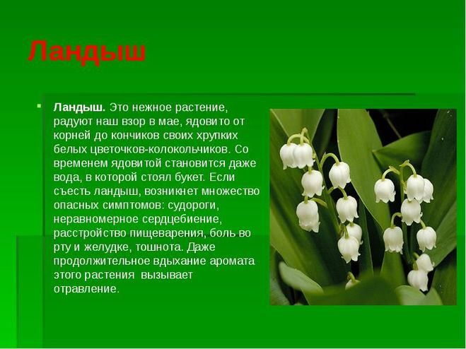 Реферат по лекарственным ядовитым растением 524