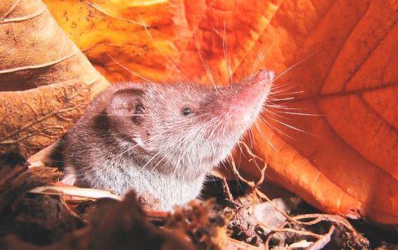 Какое самое маленькое теплокровное животное в мире?  Самое Маленькое Животное в Мире