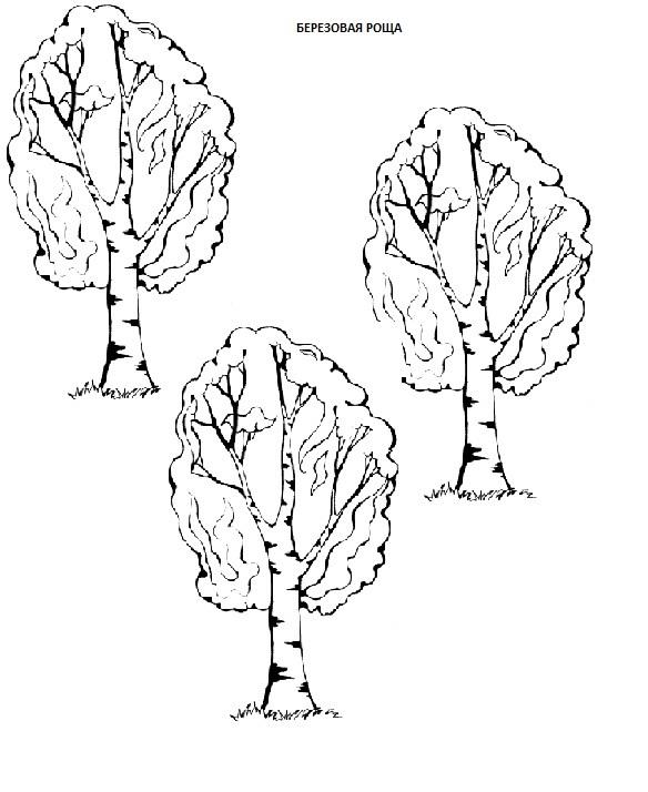 широколиственный лес березовая роща