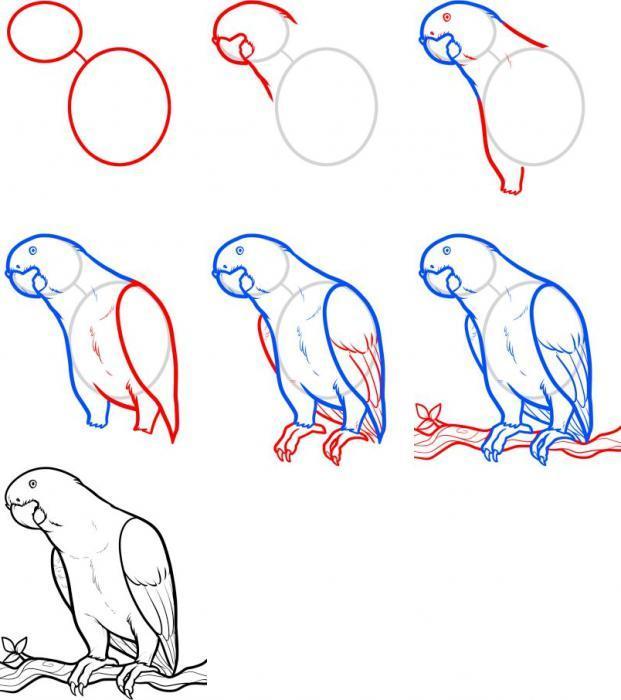 Рисунки попугая схема