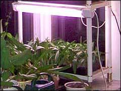 можно ли подсвечивать рассаду лампой дневного света