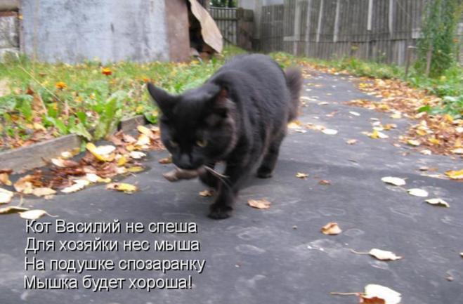 кто ловит крыс кот или кошка