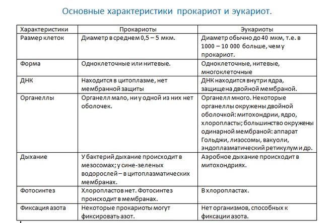 таблица прокариот и эукариот
