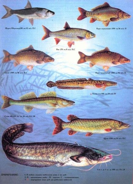 учиться название рыб с фото поиска отзывам: