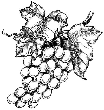виноград Фотографии картинки изображения и сток