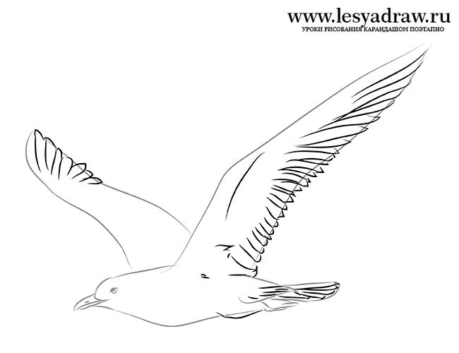 Раскраска чайки