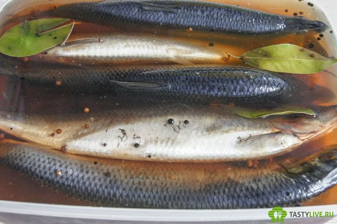 Консервирование рыбы