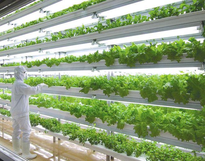 Оборудование гидропоника для выращивания зелени 83