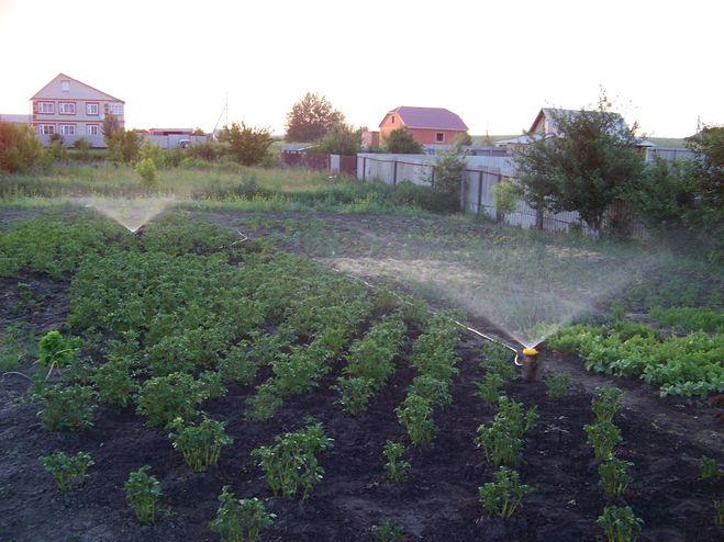 Полив на огороде своими руками фото