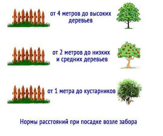Почему нельзя сажать дуб 16