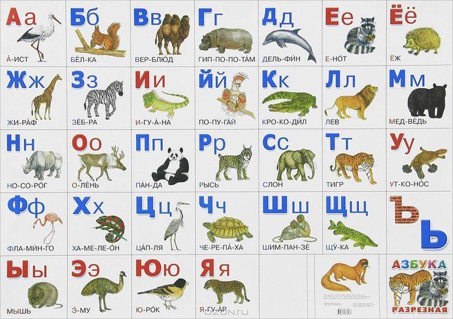 знакомство с животными учим английский