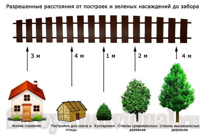 На каком расстоянии можно сажать деревья от забора