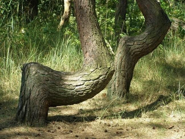 аномальный лес