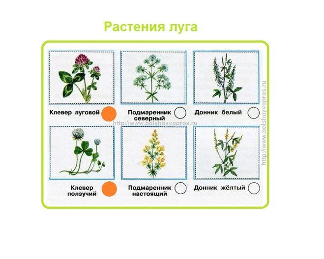 Окружающий мир 3 класс. Как правильно определить растения луга?
