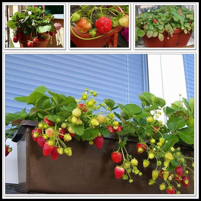 кто выращивает овощи на гидропонике дома