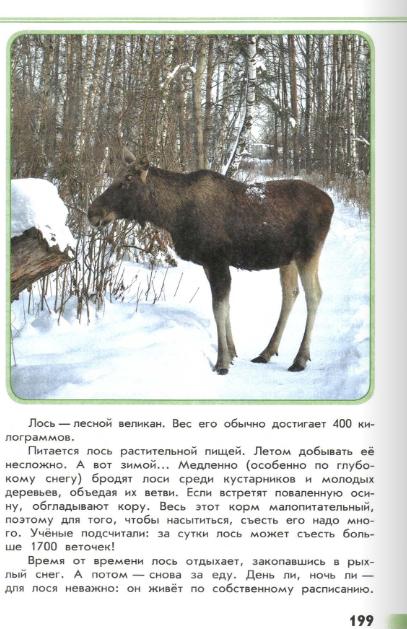 """Книга """"Зеленые страницы"""" где читать рассказы о зимней жизни зверей"""