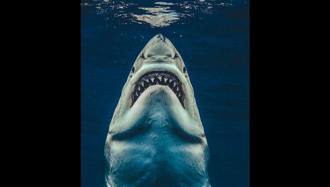 Что такое <strong>селахофобия</strong>  Что такое селахофобия Что такое селахофобия БоЯЗНЬ КАКОГО СУЩЕСТВА Селахофобия что это? Как избавиться от страха... <strong>Селахофобия</strong> -боязнь акул. Она свойственна многим людям. Им присвоено звание наиболее опасного обитателя морей и океанов. Фобия может проявляться и у людей, которые живут далеко от мест обитания акул. Симптомы селахофобии. Читать ещё Список фобий (полный). Список самых распространенных... ›Фобии›Список фобий Список самых распространенных фобий: 1. селахофобия – боязнь акул. 2. нософобия – боязнь болезней. 3. алгофобия – боязнь боли. Читать ещё Преодоление боязни акул Селахофобия, или боязнь акул. Человек испытывает страх быть съеденным акулой. Эта фобия очень странная: большинство больных никогда не видели этих хищников... Читать ещё Распространенные фобии человека: полный список Список фобий селахофобия — страх акул сидеродр