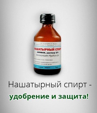 опрыскивание нашатырным спиртом клубника использовать термобелье