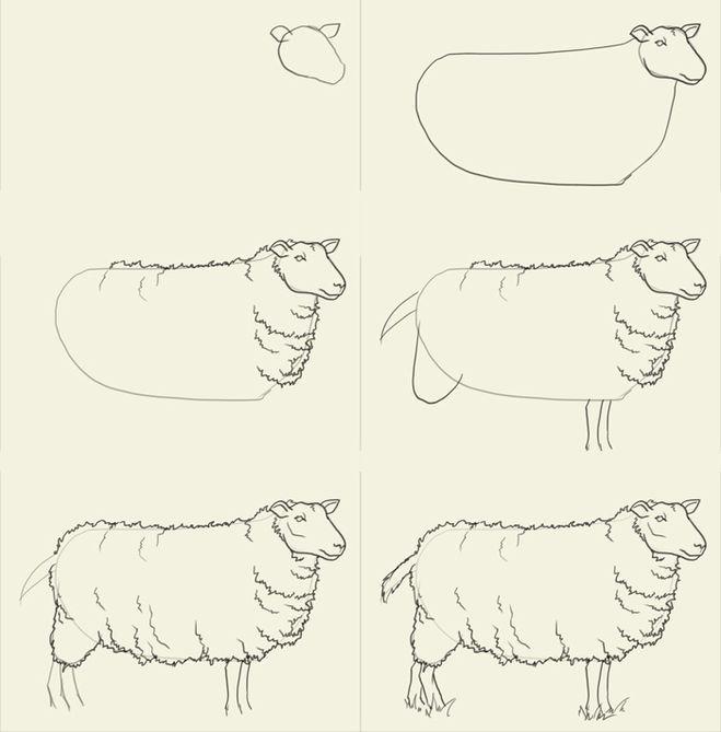 поэтапного рисования овцы.