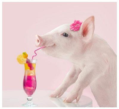 свинья картинка Новый год