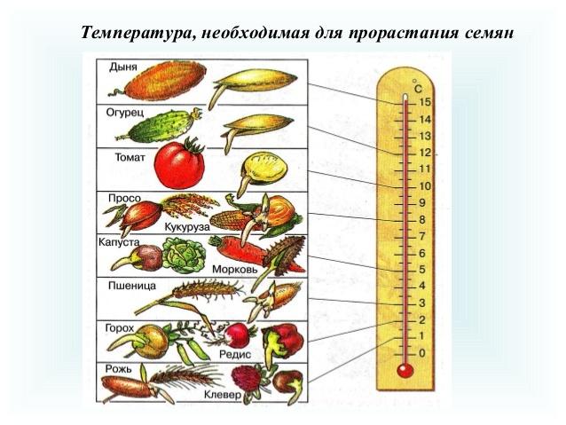 Время проращивания семян