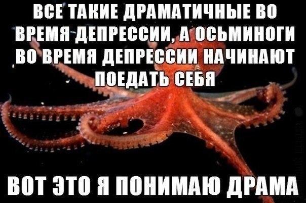 Анекдот Про Осьминога