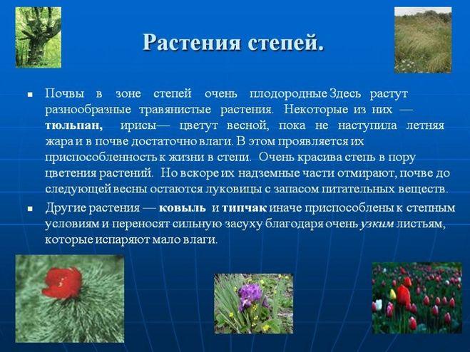 как растения приспособились для жизни в степи