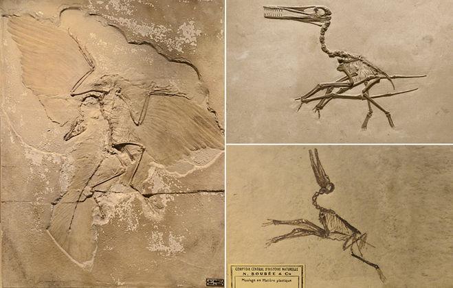 динозавры, археоптерикс, птеродактиль, музей, скелет