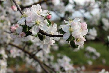 """Какие предложения составить со словом """"весна"""" ?"""