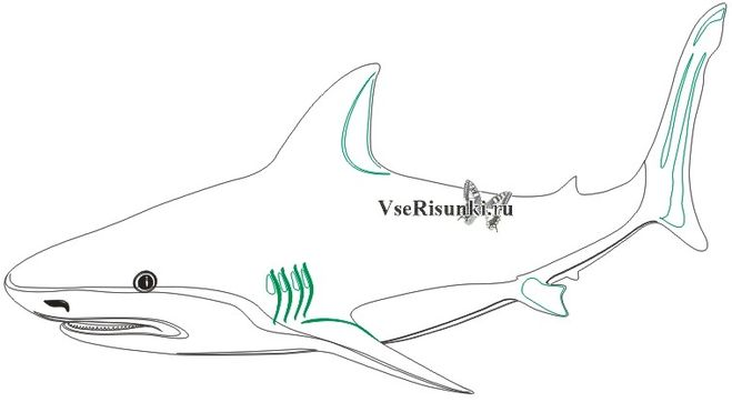 Как нарисовать акулу поэтапно для начинающих