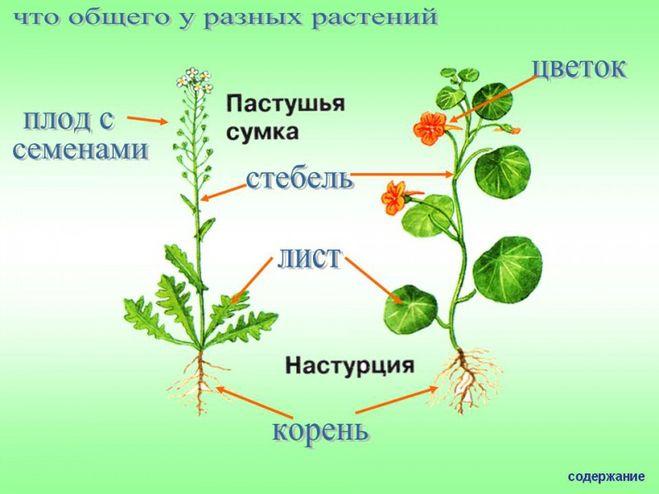 общее знакомства с растениями