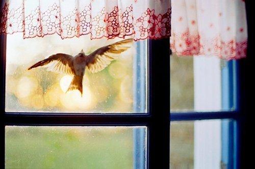 птица к смерти